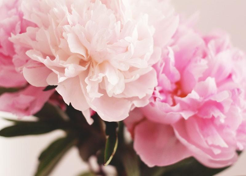 Pink Peonies, Bumpkin Betty