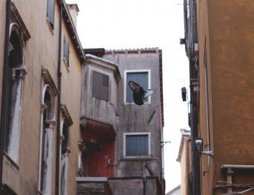 Postcards from Venice, Bumpkin Betty