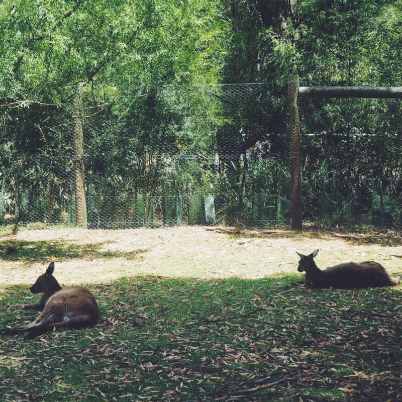 Australia travel diary, Bumpkin betty
