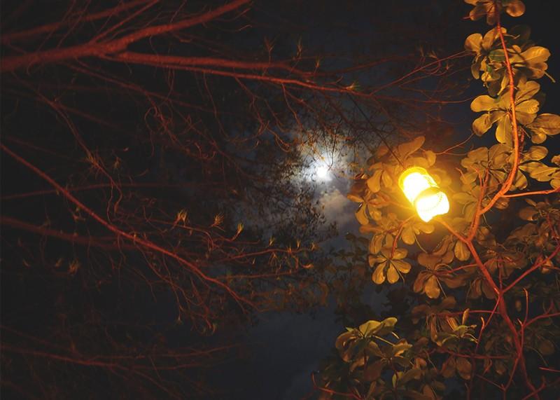 Gili T at night, Bumpkin Betty