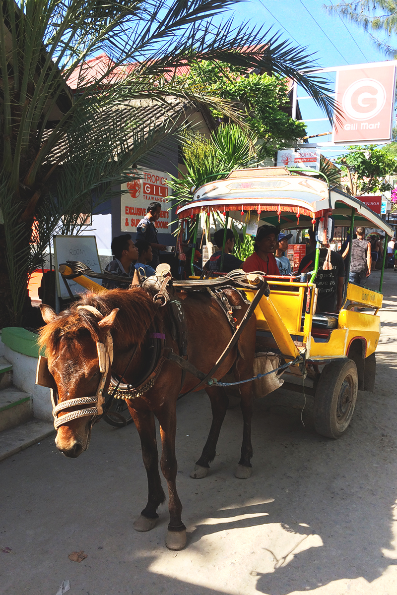 How to get around in the Gili Islands, Bumpkin Betty