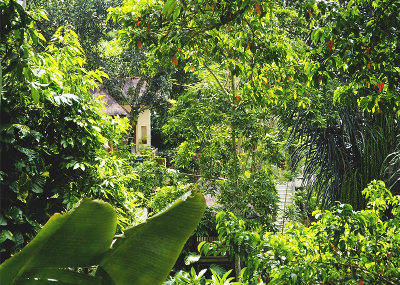 Top thing to do in Ubud, Bumpkin betty