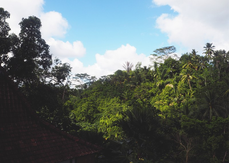 View from Alam Ubud Bali, Bumpkin betty