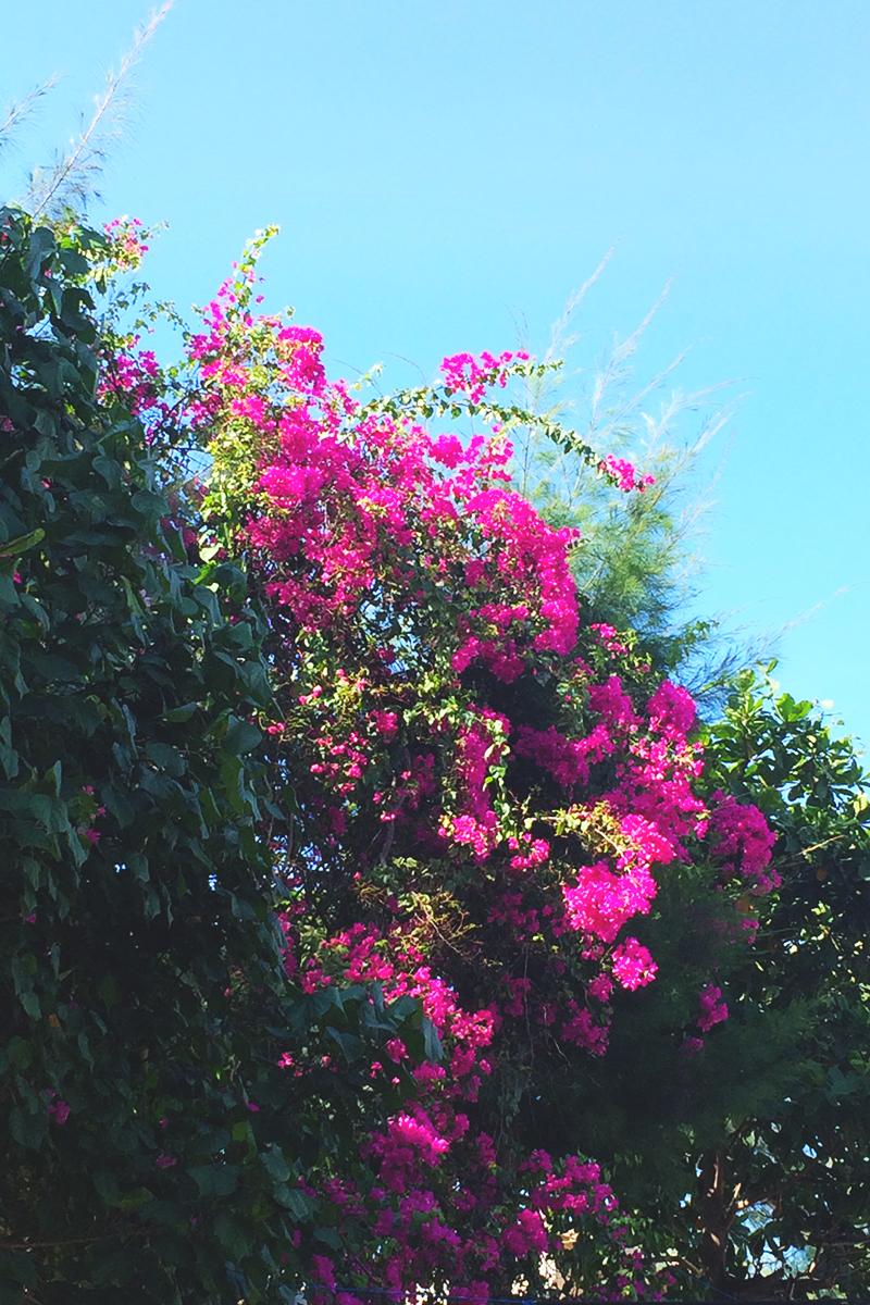 Visiting the Gili Islands, Bumpkin Betty