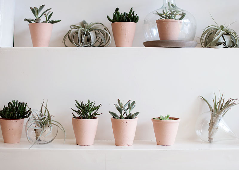 Pink potted succulents, Bumpkin Betty