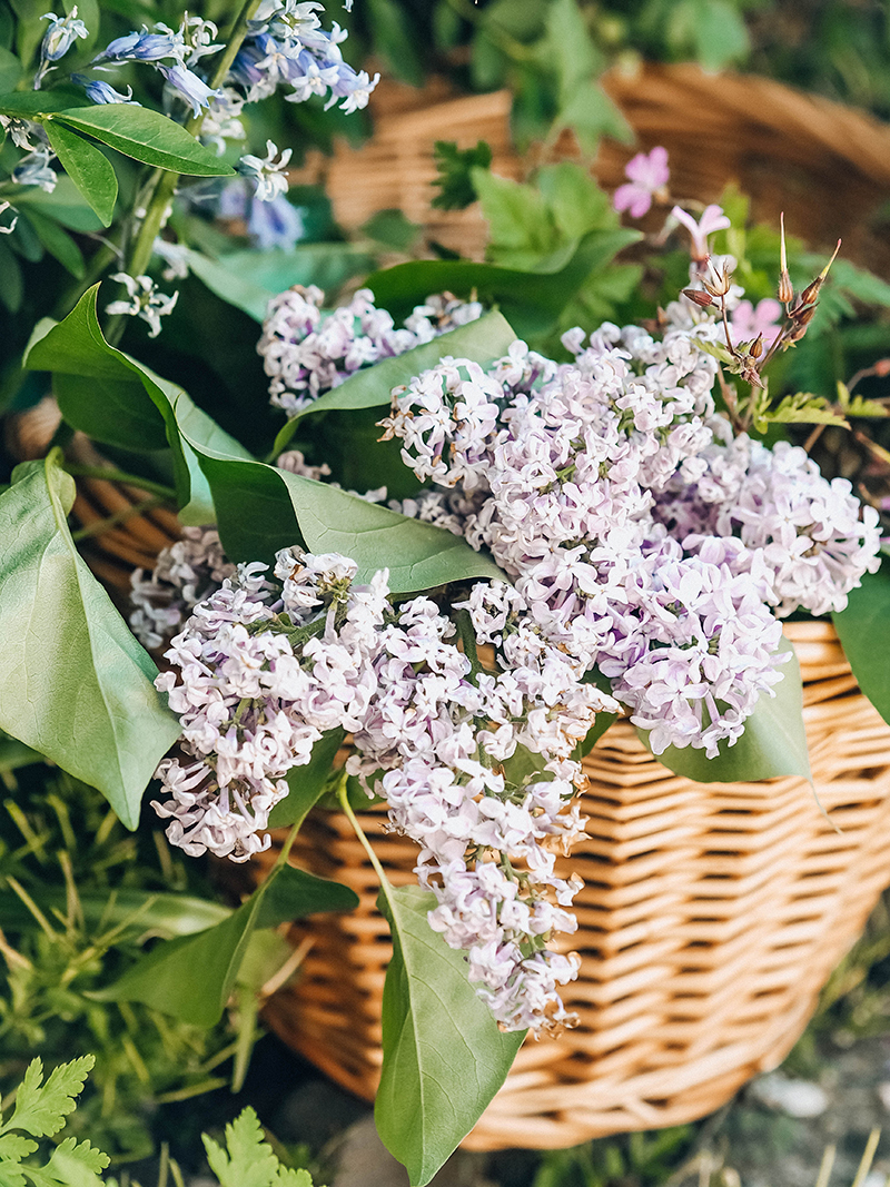Lilac season photography, Jaclyn Ruth